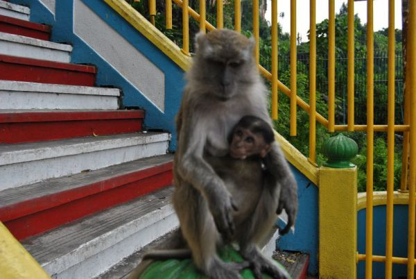 Affe mit Baby // Monkey with Baby
