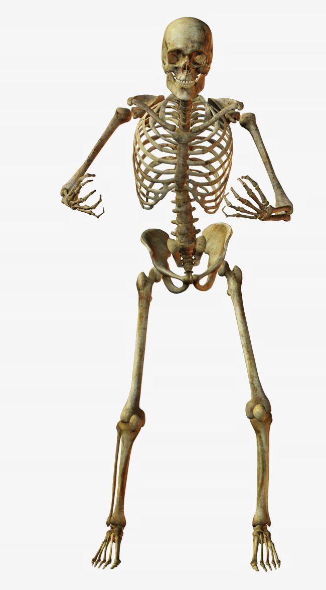 Hugging Skeletons Smiling Skull Surrounded Yellow Png Transparent Clipart Image And Psd File For Free Download Posing Skeletons Human Skeleton Anatomy Skeleton Drawings