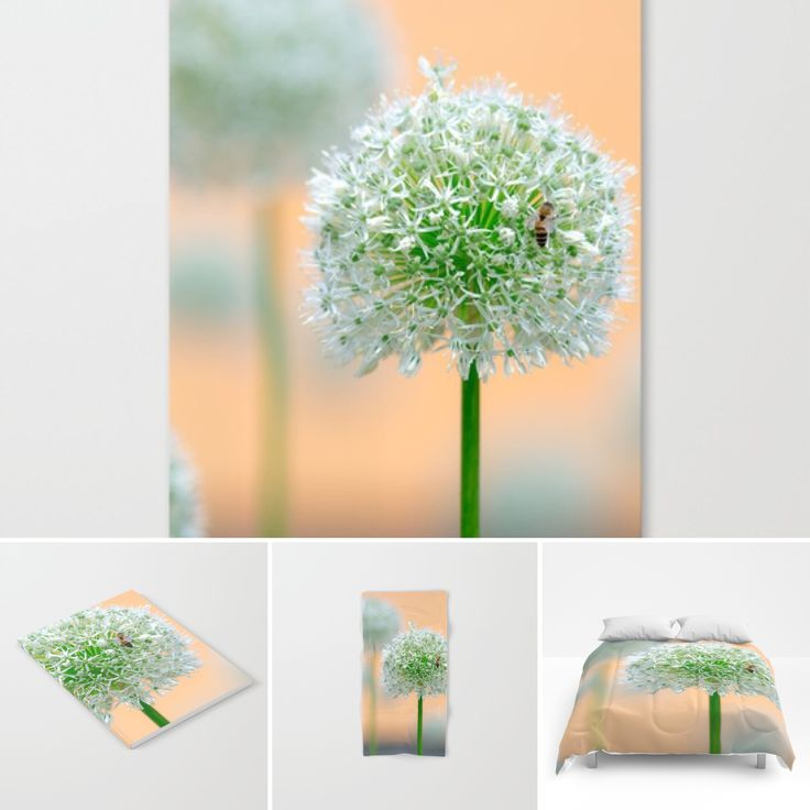 Flower power 👉🏼https://society6.com/tanjariedel👈🏼 #flowers #flowerpower #individuality #sales #s6 #society6 #society6art #style #pastell #nature #natur #bee #bedroom #bookstore #towls #art #allium #homeware #homeart #designs #patterns #apricot #garden #roominspiration #roomdecor