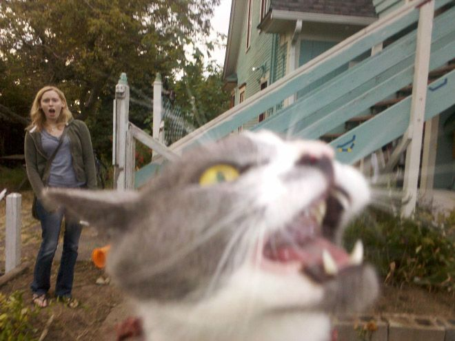 Cats destroy photos – 15 Pics
