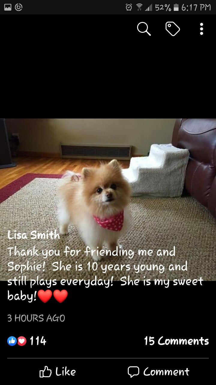 Pin By Barb Martz On Facebook Dogs Facebook Dog Years Younger
