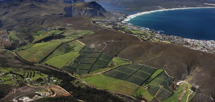 Drive down the famous coastal Whale Route through Gordon's Bay, Pringle Bay and Betty's Bay (the best land-based whale watching in the world)