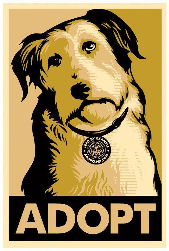 Get Your Dog To Obey Read More Here Dog Poster Animals Pets
