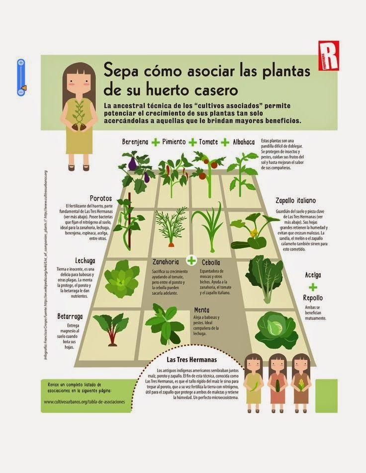 Cultivar el Huerto Casero.: Beneficios de la asociación de cultivos.
