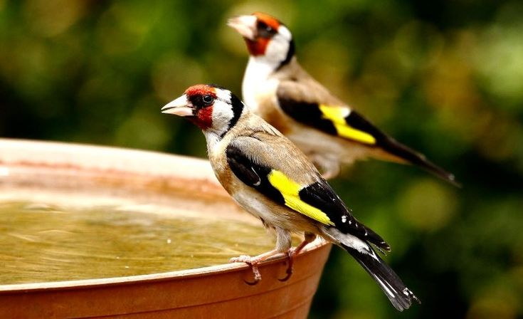 2017 madara, fája, rovara, hala, emlőse, vadvirága... | Föld Napja Alapítvány