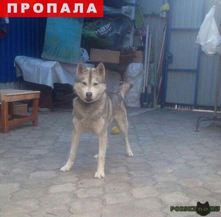 Пропала собака кобель г.Краснодар http://poiskzoo.ru/board/read27033.html  POISKZOO.RU/27033 .. августа, примерно в .. в районе ..-го проезда Стасова и Свободной, пропала собака! Порода хаска-кобель, отзывается на кличку Рей. Окрас серый, глаза тёмно-коричневые. С широким ошейником. Огромная просьба, кто видел или знает о месте нахождение собаки, пожалуйста, откликнитесь! За оказанную помощь будет денежная благодарность.   РЕПОСТ! @POISKZOO2 #POISKZOO.RU #Пропала #собака #Пропала_собака…