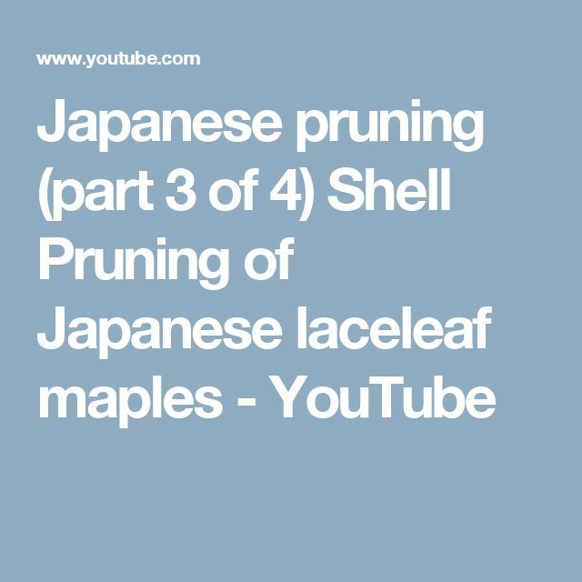 Japanese pruning (part 3 of 4) Shell Pruning of Japanese laceleaf maples - YouTube