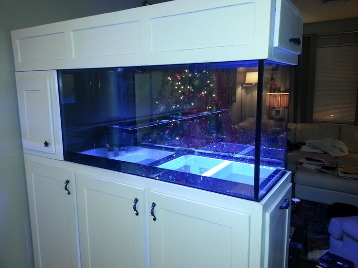 New build 90gal room divider reef central online community acuario pinterest room - Fish tank partition wall ...