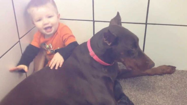Baby with Doberman and her puppies