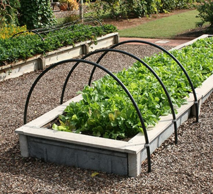 10 ideas about raised vegetable gardens on pinterest - South florida vegetable gardening ...