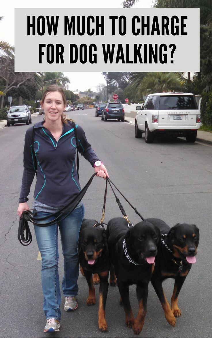 What should you charge for a dog walking service?