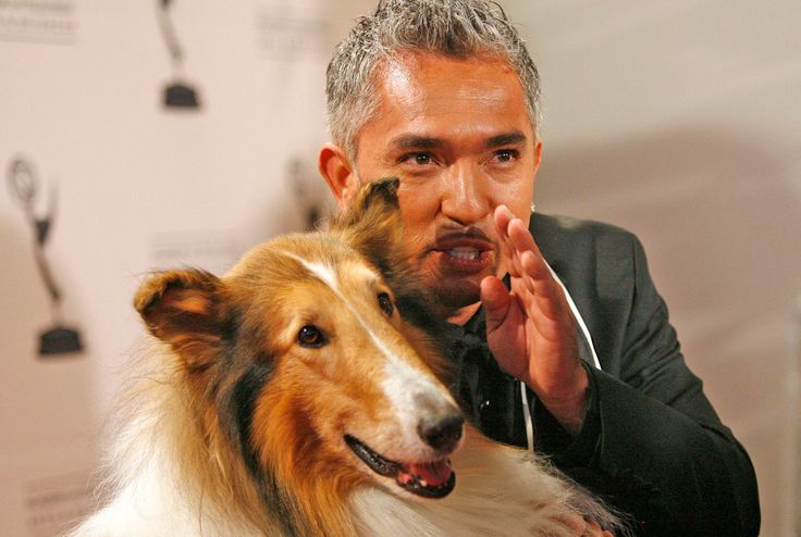"'The Dog Whisperer' curated an audiobook collection for your pupHave you ever been listening to an audiobook and thought ""I love this but I wish they had more offerings for dogs""? If so you might be the only person but Cesar Millan still wants to help you. The dog whisperer is teaming up with Audible to launc... Credit to/ Read More : http://ift.tt/2viQU6I This post brought to you by : http://ift.tt/2teiXF5 Dont Keep It Share It !!"