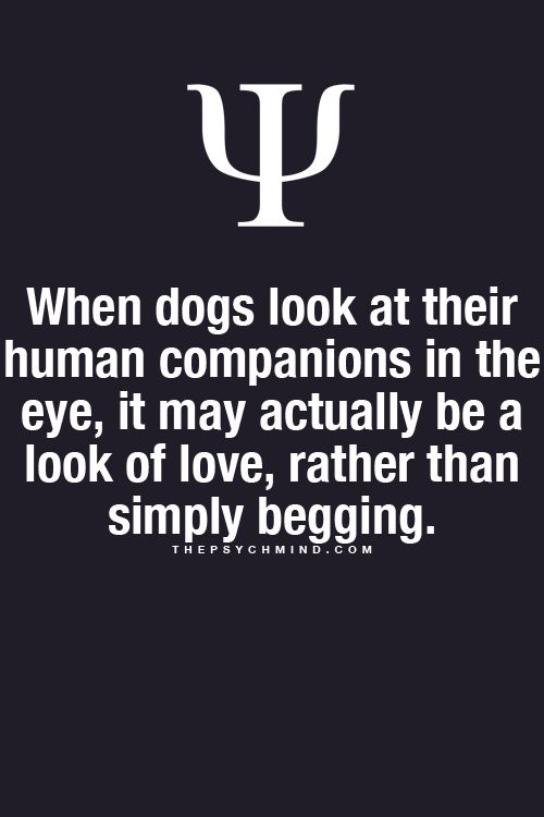 Awwwwwh! Puppy Love