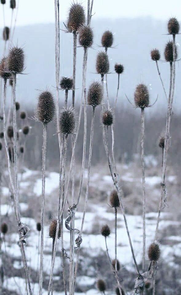 #focus #nature #winter #freez #white #canon 60d #rcmovant
