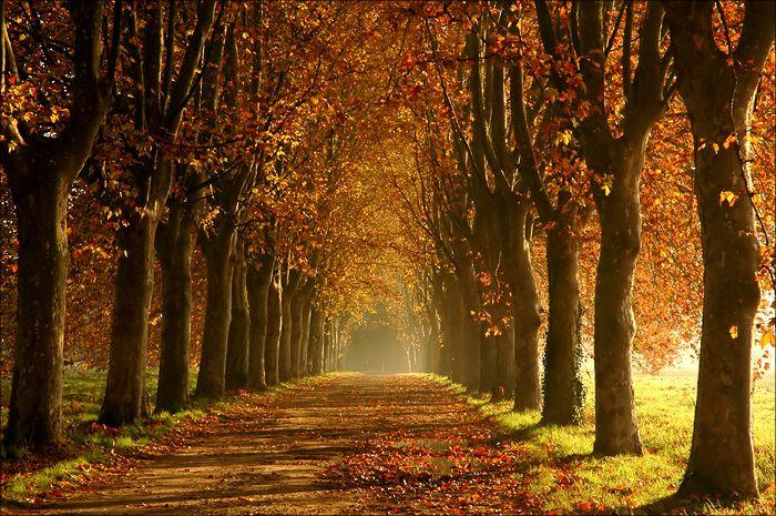 Люблю фото аллей. Это кажется платаны. Здесь хоть и изображена осень, но нет ощущения безнадёги, а какой-то надежды, ожидания чего-то хорошего. И финал не угадывается. Ибо всё в лёгкой дымке. [изо... — On the corner of mainstream