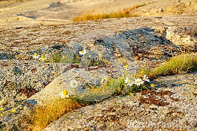 Autumn Flowers On Bedrock, Norway - Download From Over 30 Million High Quality Stock Photos, Images, Vectors. Sign up for FREE today. Image: 44815859