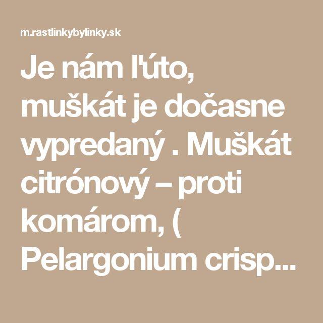 Je nám ľúto, muškát je dočasne vypredaný . Muškát citrónový – proti komárom,  ( Pelargonium crispum 'Lemon' L., Pelargonium citrosum L. 'Mosquito fighter', ) 3,50 € / rastlinka   :: RASTLINKY BYLINKY