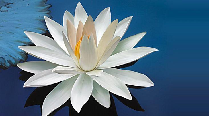 O porquê de a flor de lótus ser um dos símbolos mais antigos e profundos do nosso planeta