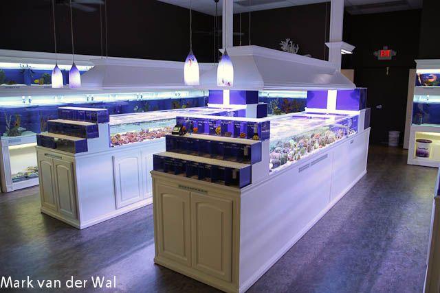 fish store design | Pure Reef in Alpharetta, Georgia is a well executed aquarium store