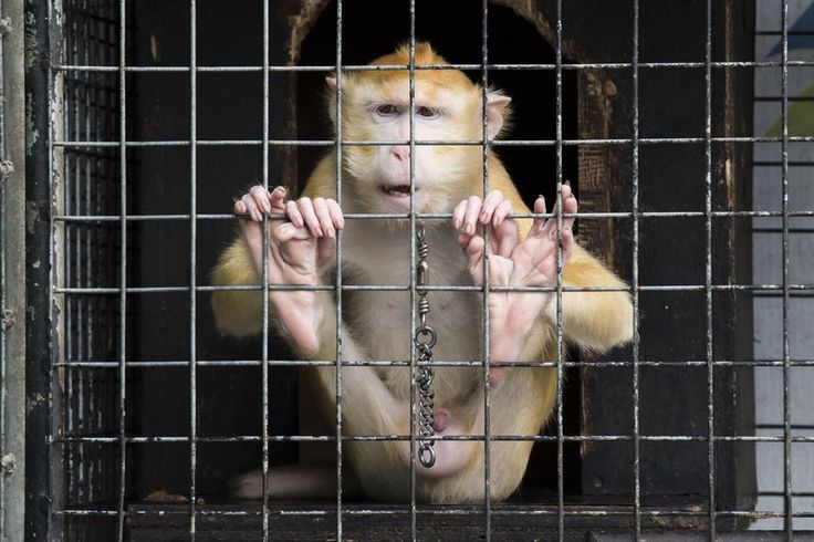 """""""The Prisoner"""" Photo by Emanuele Del Bufalo -- National Geographic Your Shot"""