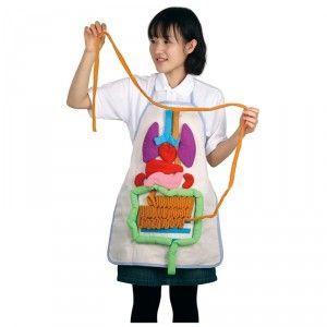 anatomy-apron