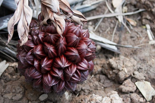 19 Weird Fruits From Asia, Maybe You Have Never Heard Of
