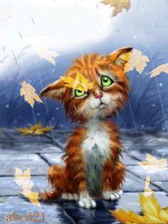 Рыжий котенок под осенним дождем
