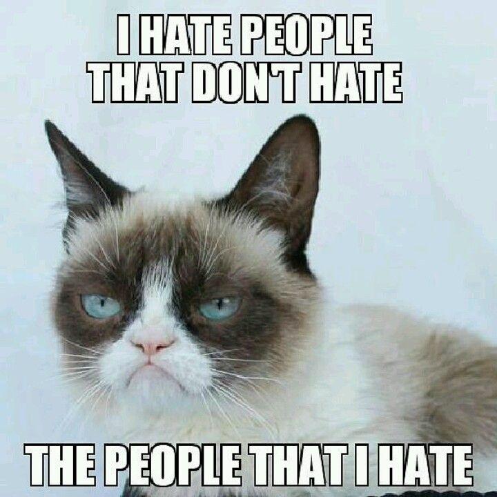 17 Best images about Grumpy Cat on Pinterest | Grumpy cat ... Loathe Cat