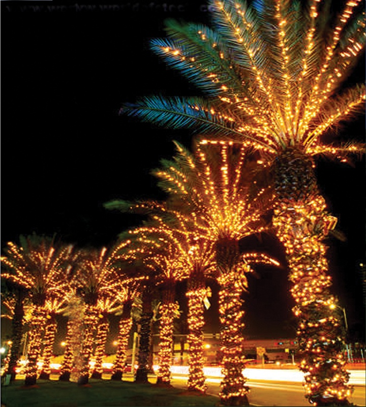 63 Best Images About Lighted Palm Trees On Pinterest