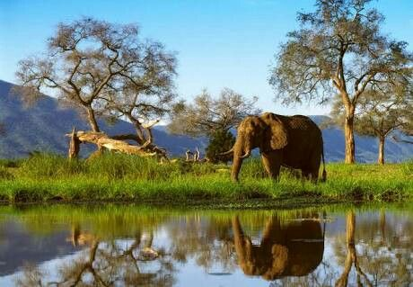 The park was inscribed, in conjunction with the Sapi Safari Area (118,000 ha) and Chewore Safari Area (339,000 ha) as a single UNESCO World Heritage site (for a total of 676,600 ha) in 1984. The Mana Pools were designated a Ramsar wetland of international importance on 3 January 2013