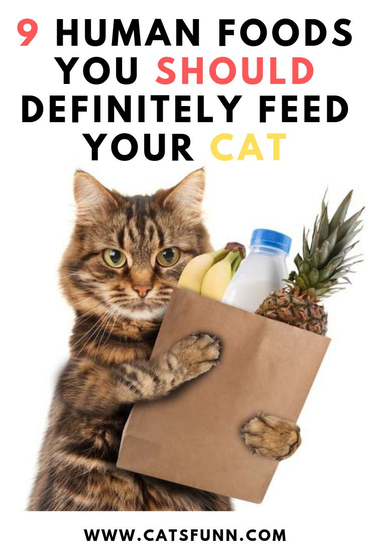 9 human foods you should definitely feed your cat best