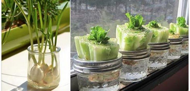 Faites des ÉCONOMIES avec ces 13 aliments qui repoussent dans l'eau !