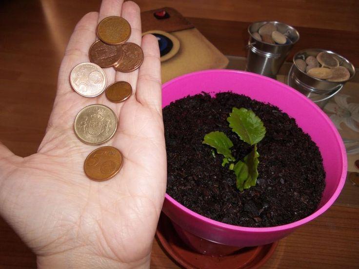 17 best images about plantas y jardines on pinterest tes - Planta china del dinero ...