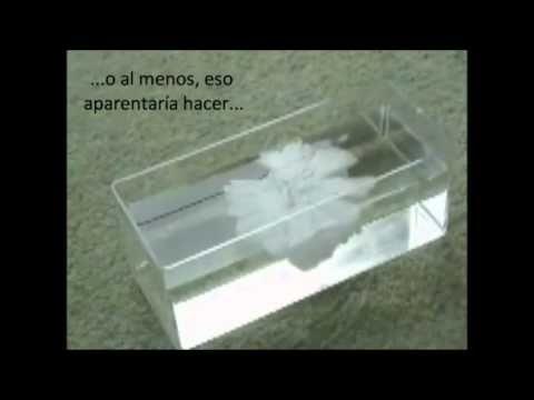 Experimentos Caseros: Como hacer hielo instantáneo