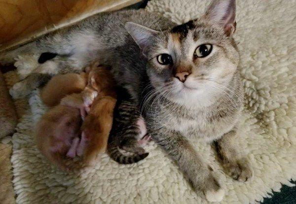Man Comes To Work To Find Stray Cat Who Picked Their Place To Have Babies On Thanksgiving Eve With Images Cat Vs Dog Stray Cat Siberian Cats For Sale