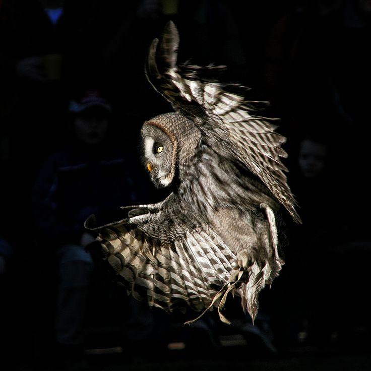 Owl in flight by Thomas Röttgen on 500px