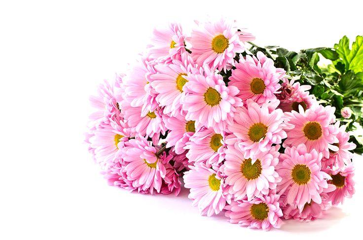Da Garden Zanet potete trovare crisantemi recisi a partire da solo € 0,99!  #GardenZanet #crisantemi #reciso #ottobre