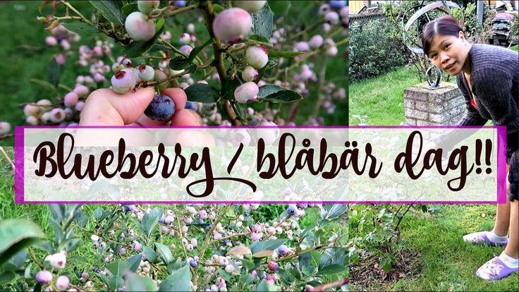 Blueberry day  |  Blåbär dag !!  | 🇸🇪 | Vlog#66