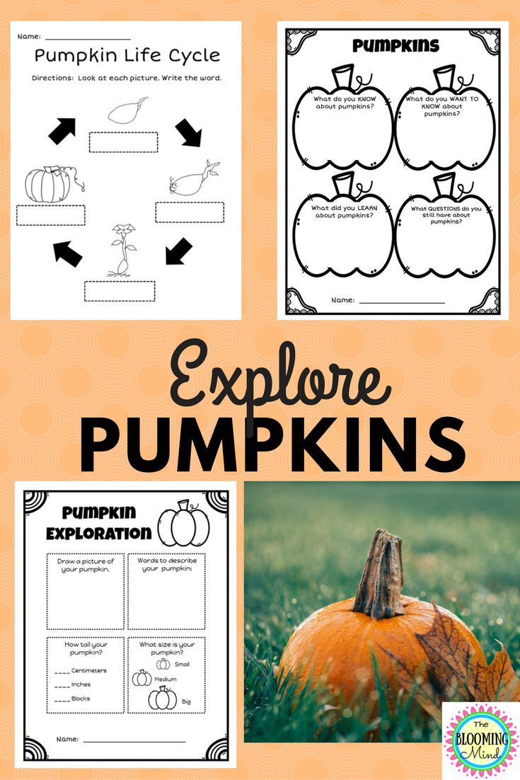 Pumpkin Science Worksheets Pumpkin science, Science