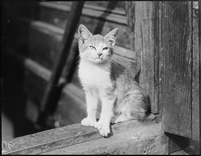 """Cat 