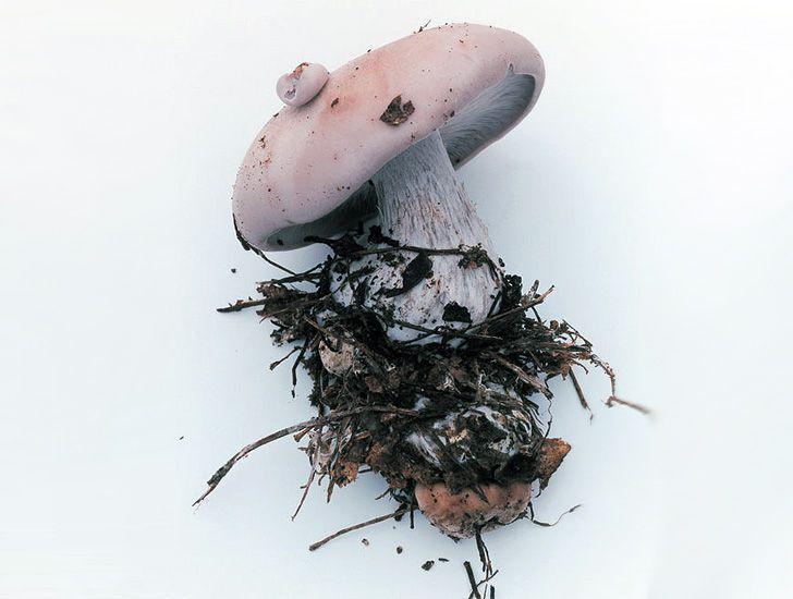 Takashi Homma Photographs Radioactive Mushrooms from Forests Near Fukushima | Inhabitat - Green Design, Innovation, Architecture, Green Building