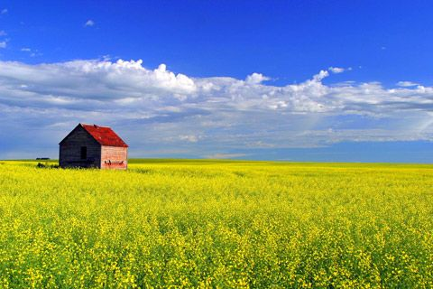 Blue sky from the field, yellow fields from the sky