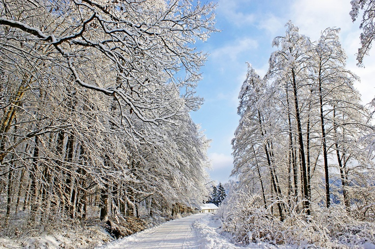 Road near Virovitica lakes in winter.  Work of Boris Kozjak