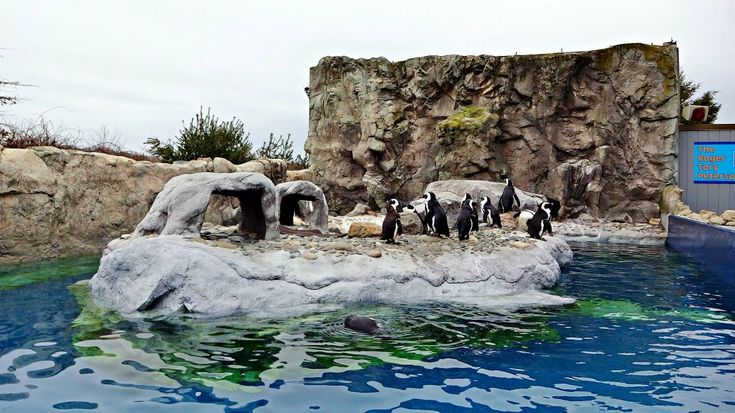 Spending the Day at Mystic Aquarium in Mystic, CT