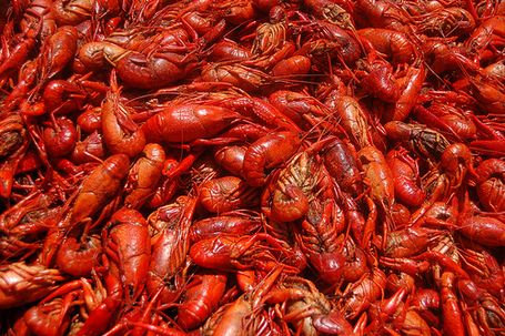 Google Image Result for http://modmobilian.com/uploads/2011/04/crawfish1.jpg
