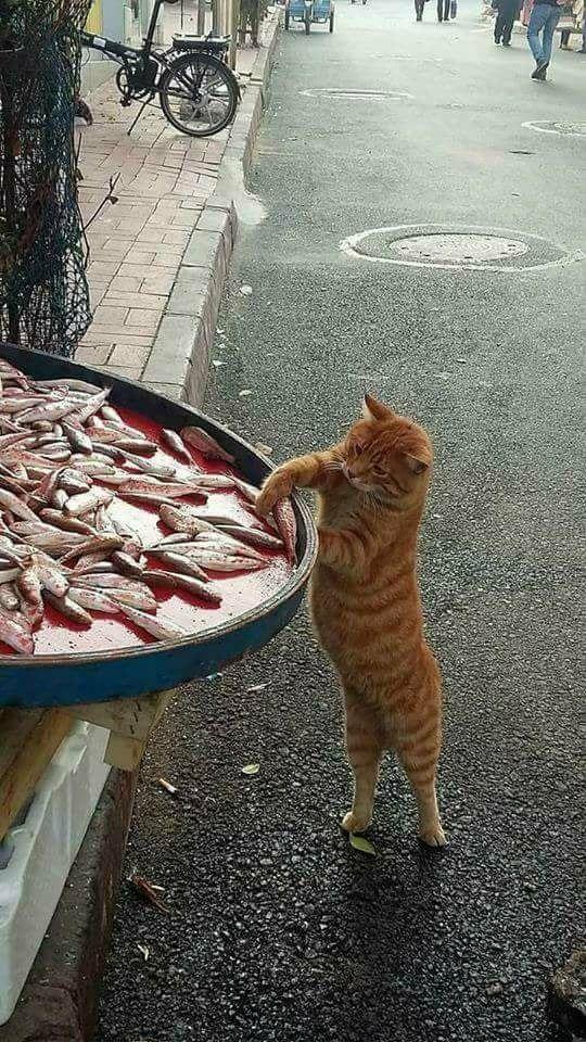 Hahaha ! Ça c'est bien un chat roux !