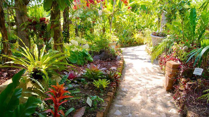 メキシコのプエルト バジャルタからほんの 30 分ほどの場所にある野生生物のための場所で、土着の鳥類、植物、動物を観察しましょう。