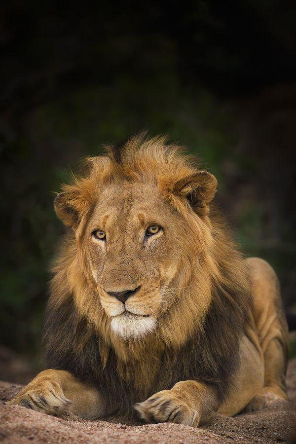 Motswari King by Mario Moreno