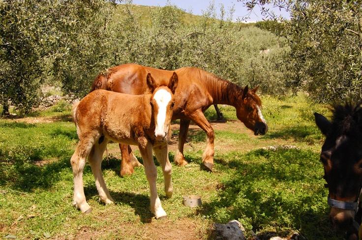 """""""Divertimento""""  corsi di #equitazione per tutte le età Milano Giorno e Notte - We Love You! www.milanogiornoenotte.com"""