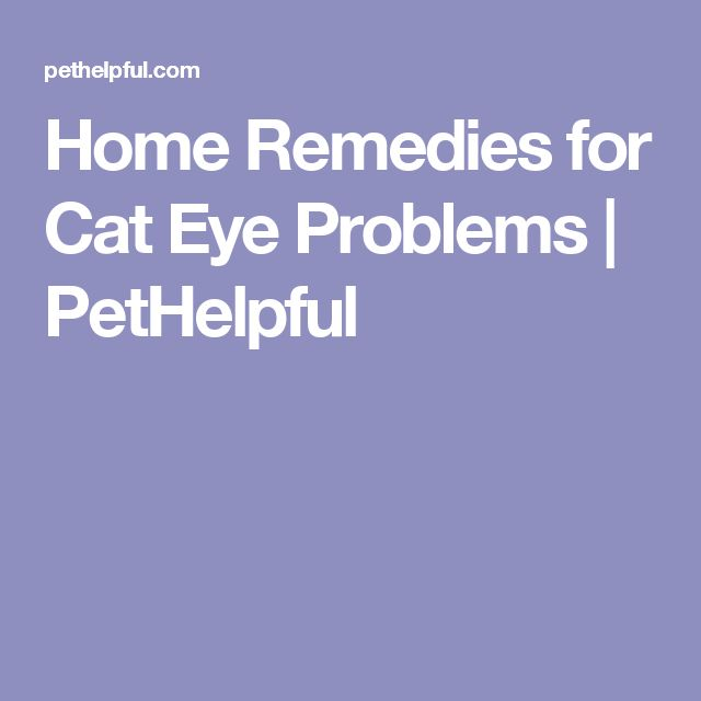 Home Remedies for Cat Eye Problems | PetHelpful